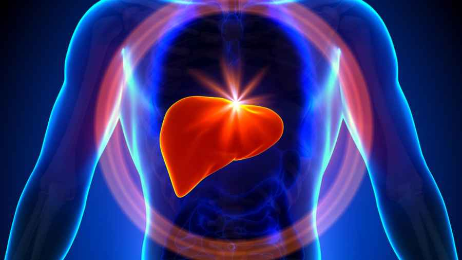 Stem cells speed growth of healthy liver tissue
