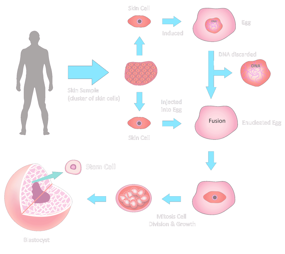 Stemaid Stem-cell Production Diagram